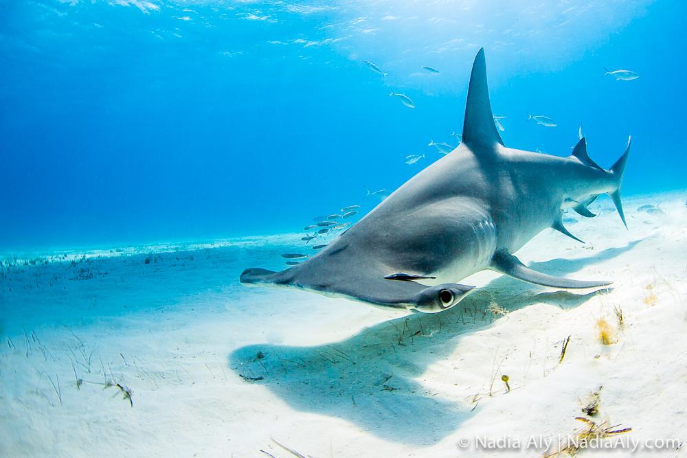 Nadia Aly Scuba Diver Life