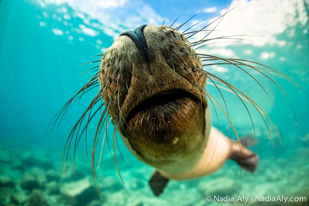 Nadia Aly - Scuba Diver Life