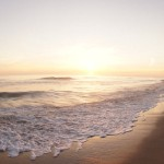 Five Dog Friendly Attractions in Carlsbad, CA