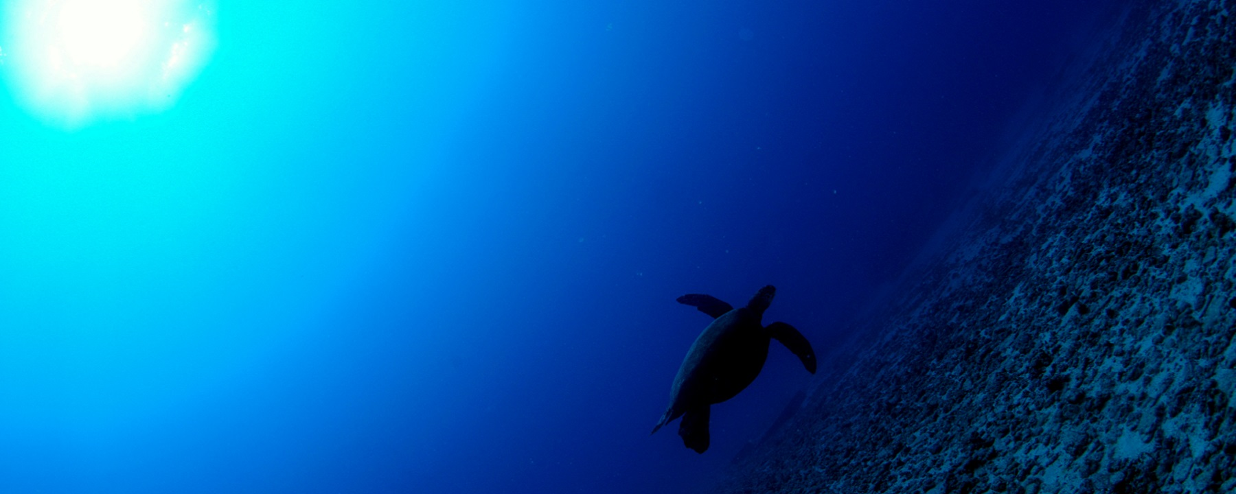 Featured-Image-Diving-Oahu